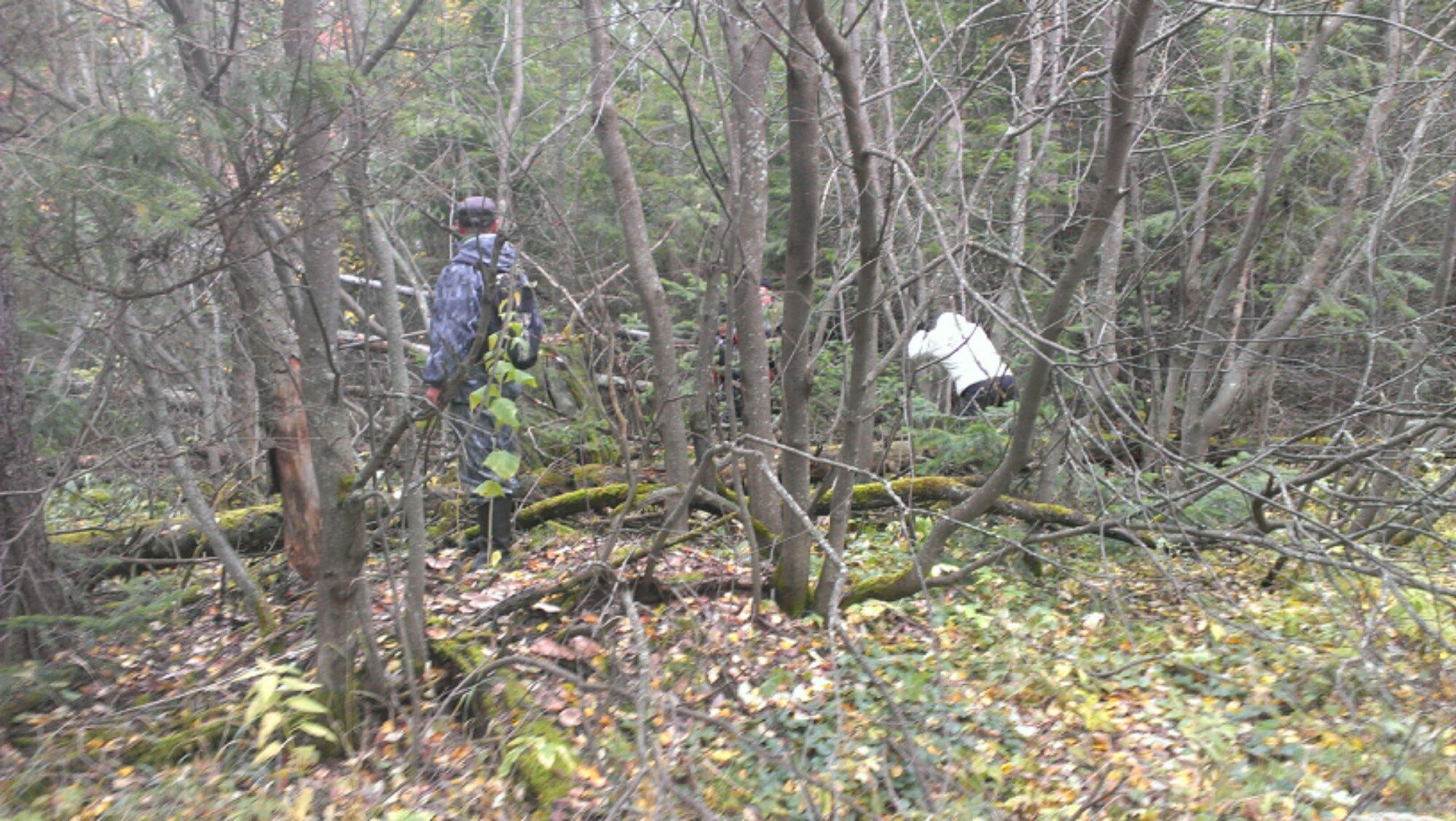 поиски людей в лесу
