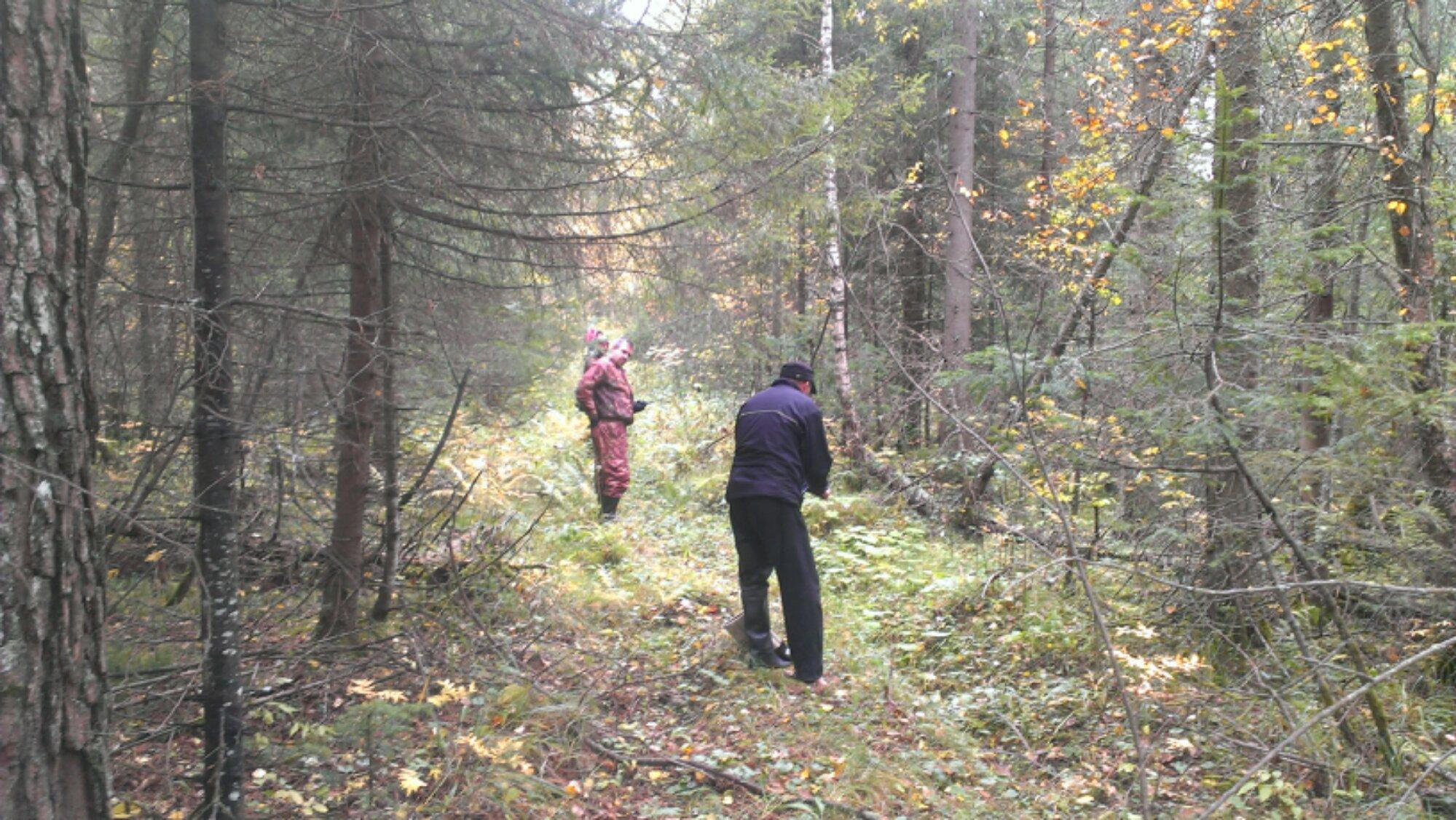 прочесывание леса
