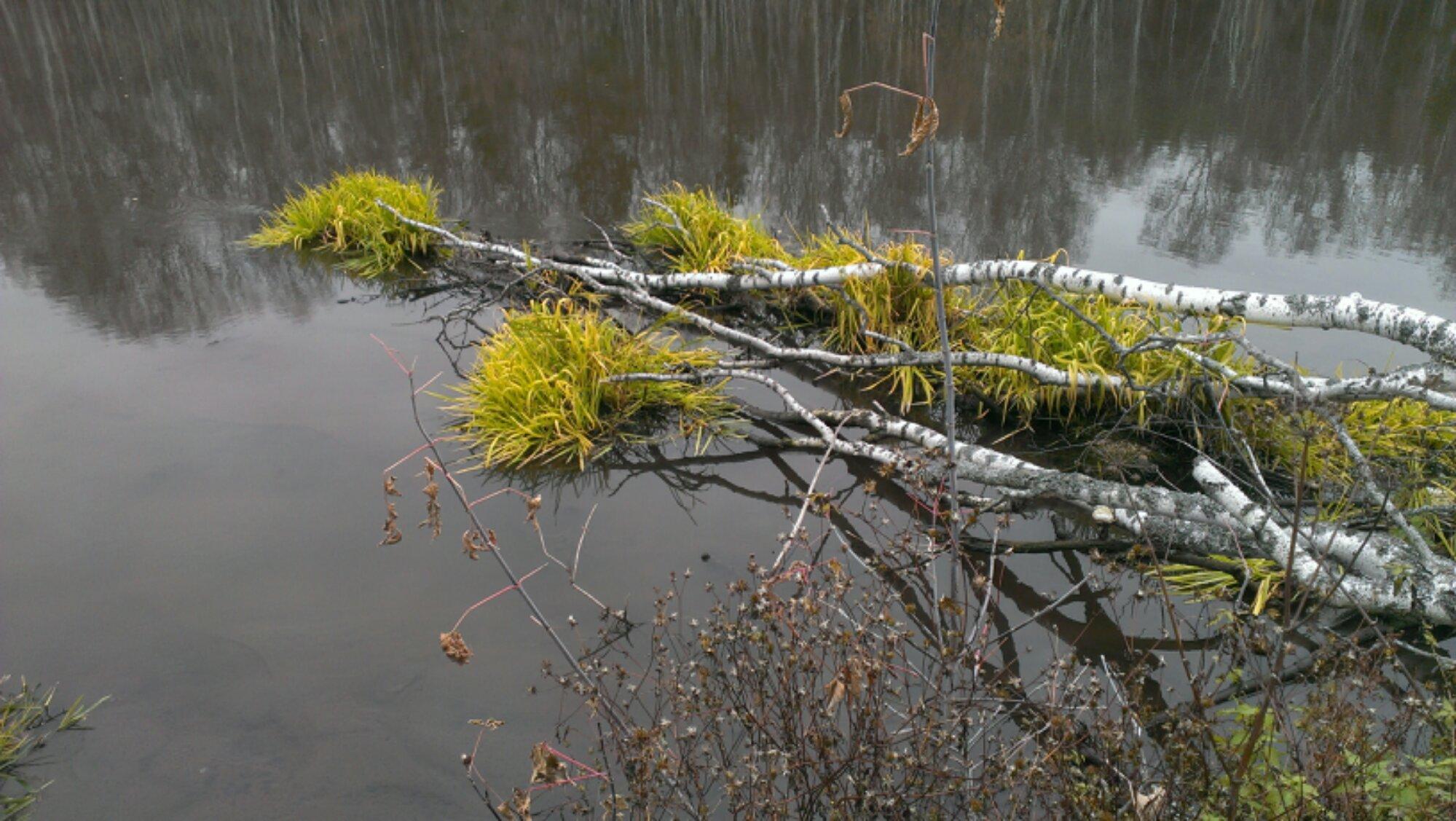 запруда на реке Миасс