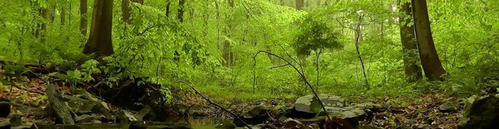 живой лес