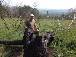 я у дерево, погибшего от молнии